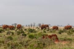 Kenia 2014