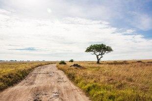 Safari in Tansania (Serengeti Nationalpark) 2019